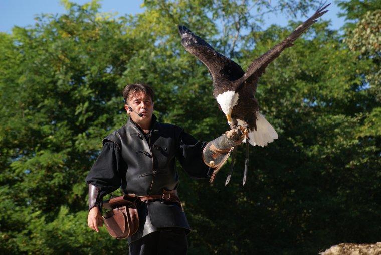 Le spectacle des aigles de Château Thierry , photos prises par ma fille !!!!