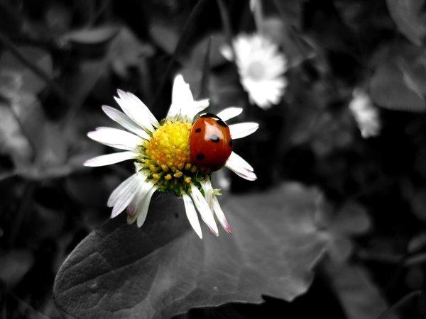 Photos noir et blanc avec une touche de couleur comme j'aime !!!