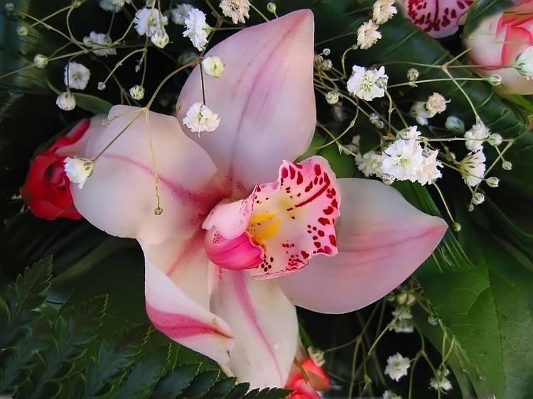 Ma passion des fleurs, les orchidées !!!  (l)