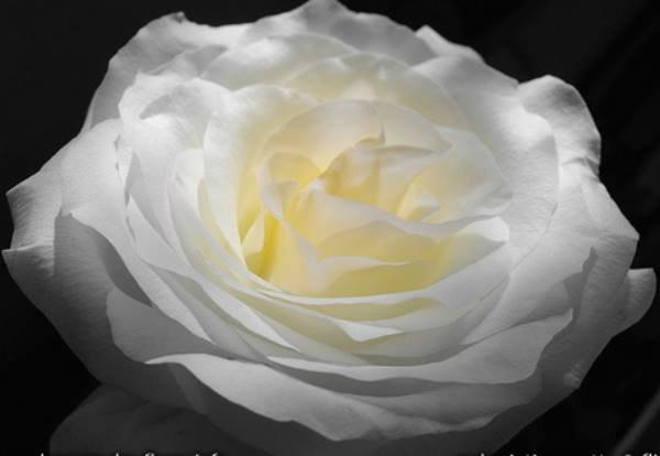 Bonne soirée a tous avec ce merveilleux monde des roses !!!