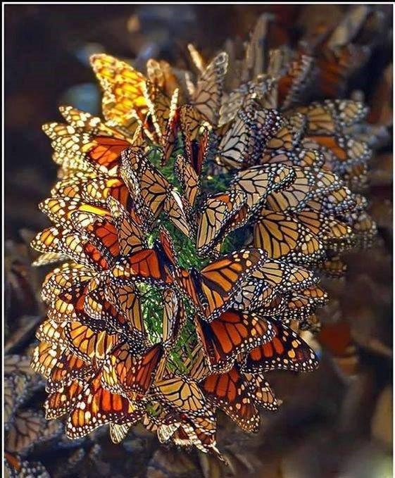 Ma passion des papillons, trop beaux ces arbres a papillons !!!