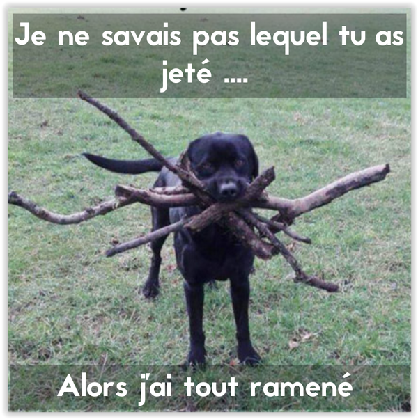 MDR , j'adore !!!!
