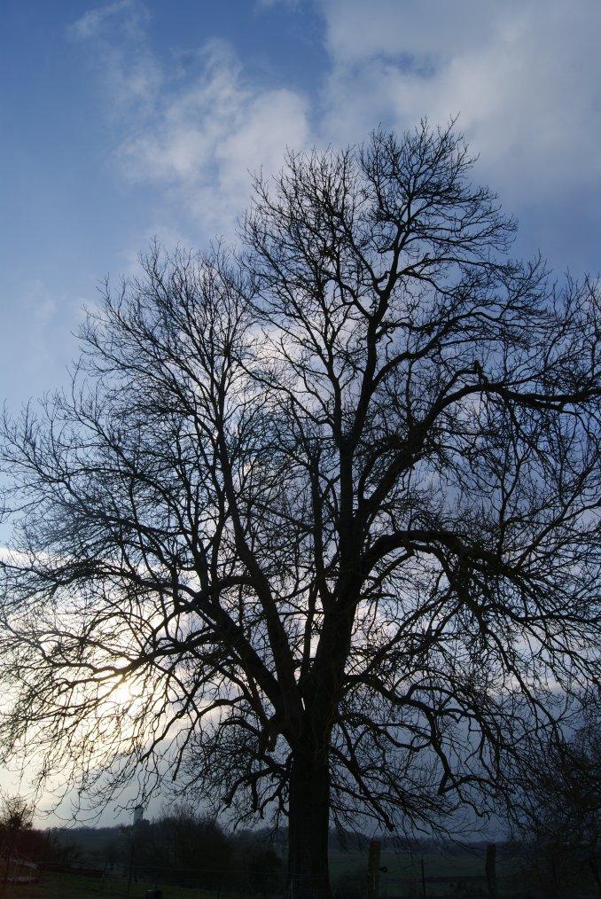 La nature en toute simplicité !!! Photo perso , prisent par ma fille !!!