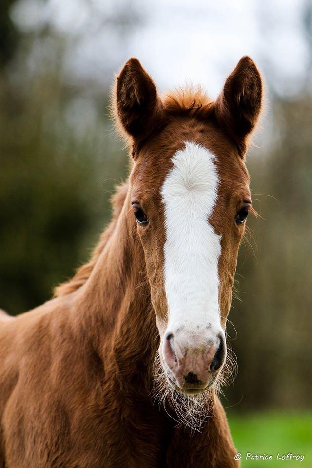Magnifiques photos prises par mon ami Patrice Loffroy, photographe animalier, elles sont trop belles !!!