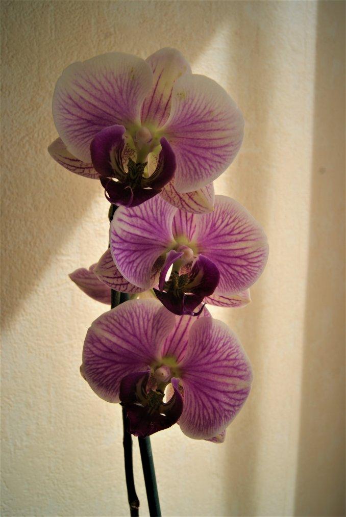 Mes orchidées, avec la petite dernière doux cadeau auquel je tiens énormément ;) !!! Photos prisent par ma fille !!! (l)