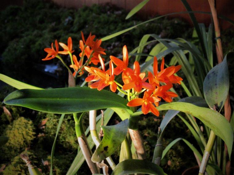Magnifique exposition d'orchidées a Villeneuve sur Bellot !!! Ouh la la il en manque des merveilles a ma collection hi hi