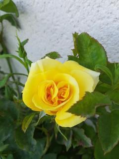 Pour une personne comme moi qui adore les fleurs, parfois un simple message, qui dit mes premières fleurs sont pour toi, apporte plus de joie et de bonheur qu'un long discourt, merci a toi Phil, gros bisous du (l)