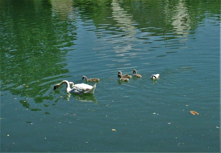 Que la nature est belle, sur la Marne de Château Thierry !!!