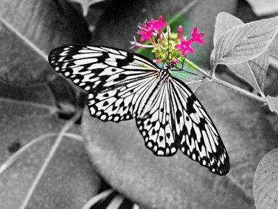 Le noir et blanc avec une touche de couleur, j'adore, photos prisent sur le net !!!