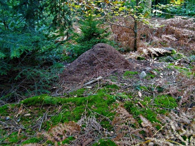 Souvenirs de ma ballade dans la forêt de Chabrières en Creuse !!! La nature en toute simplicité comme je l'aime !!!
