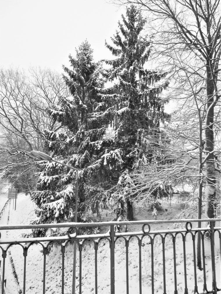 Petite ballade dans la neige avec Filou !!!