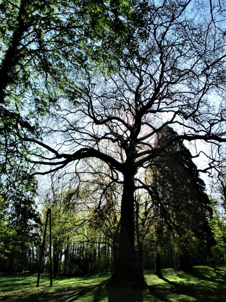 Petite ballade photos au parc du château de Dormans dans la Marne !!!