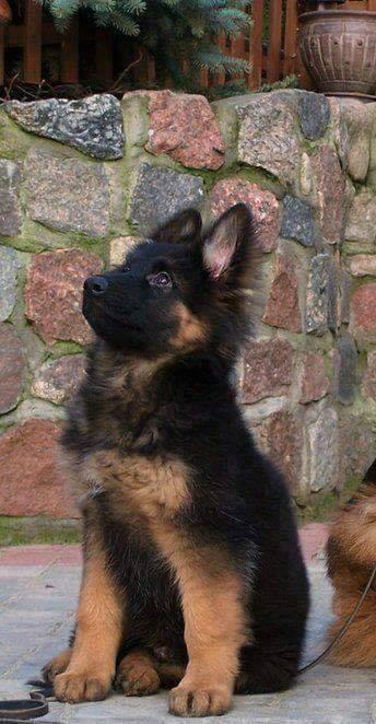 Le chien que j'ai toujours adoré !!!!