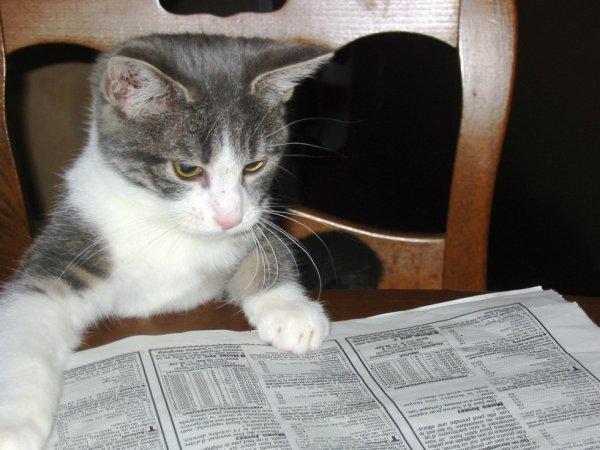 mon chat ,