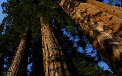 je suis tombé amoureux d'un arbre
