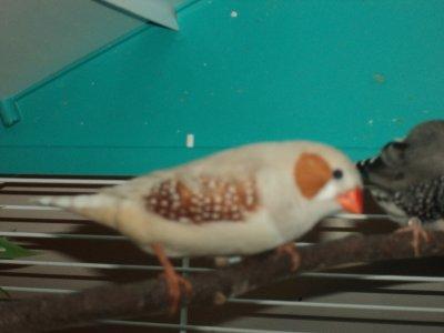 nouvelle de mes oiseaux !