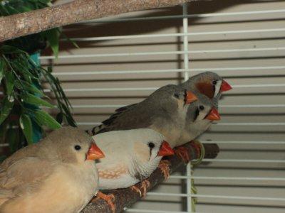 nouvelle de mes oiseaux ! ( suite )