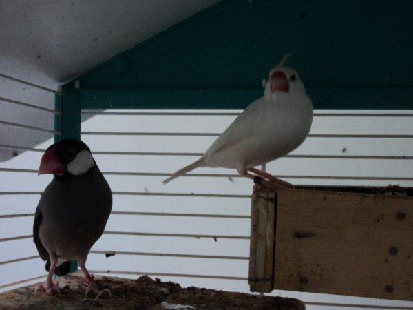nouvelle de mes oiseaux ! comment les trouvez vous ?