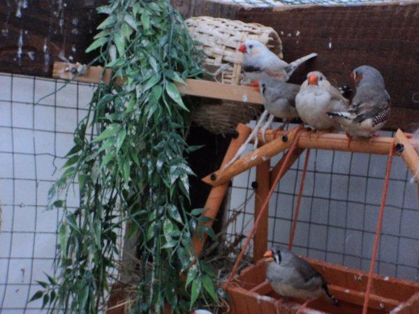 ( suite ) nouvelle de mes oiseaux ! comment les trouvez vous ?