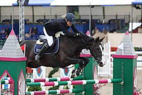Le cheval Selle Français.