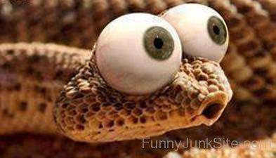 En orm i i toan!