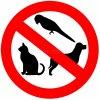 Inga djur i storstaden