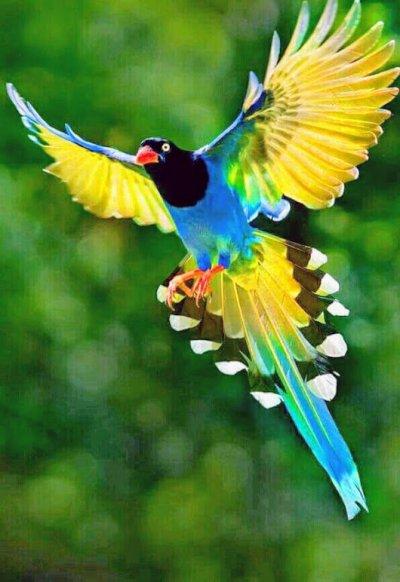 Främmande fågel