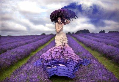 Lavendelprinsessan