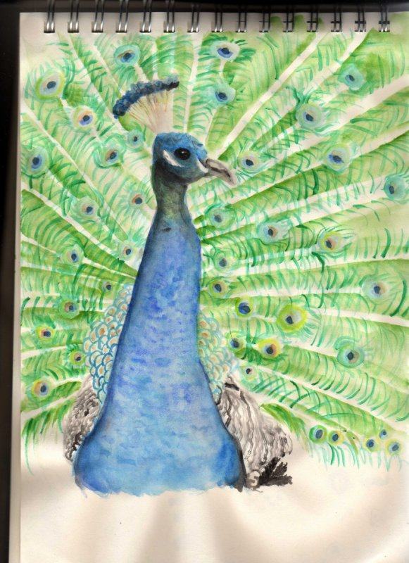 paon -only watercolour-