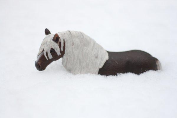 Quelques photos de chevaux dans la neige