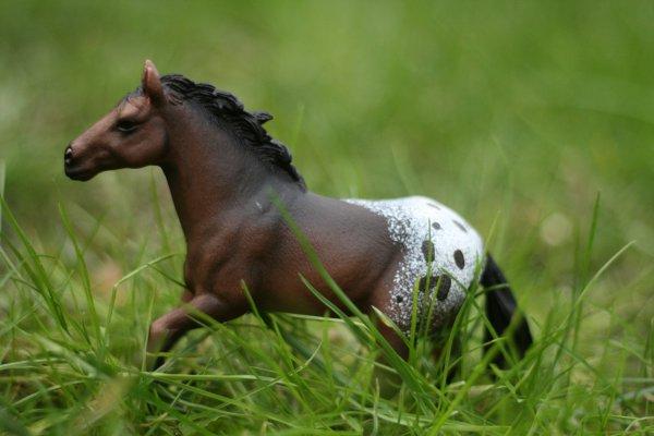Présentation des chevaux et poneys