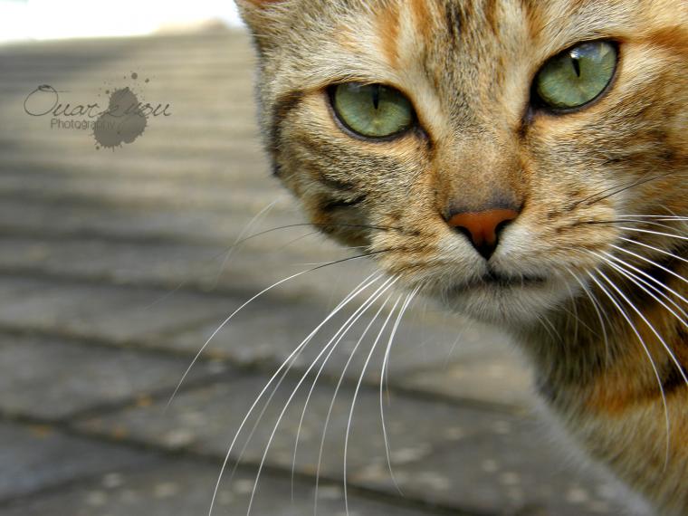 « J'ai beaucoup étudié les philosophes et les chats. La sagesse des chats est infiniment supérieure. »