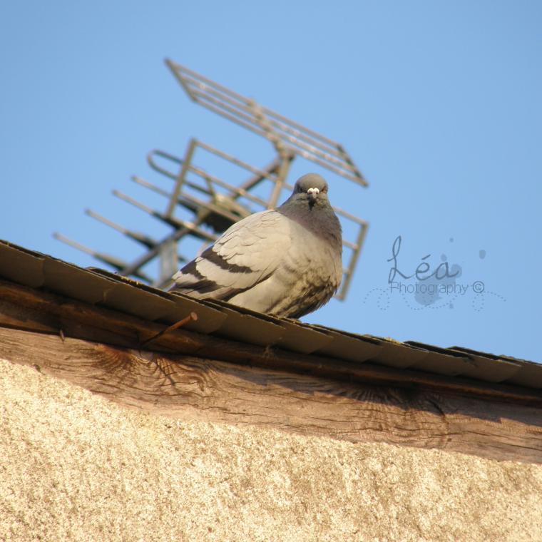 « On voudrait avoir ce courage des oiseaux en hiver. » [Françoise Lefèvre]