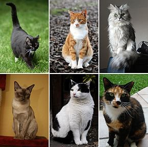 Les chats :) ♥