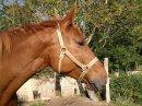Photo de oficial-poney
