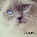 Photo de xRagdoll