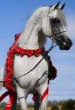 Photo de Beautiiful-Horse