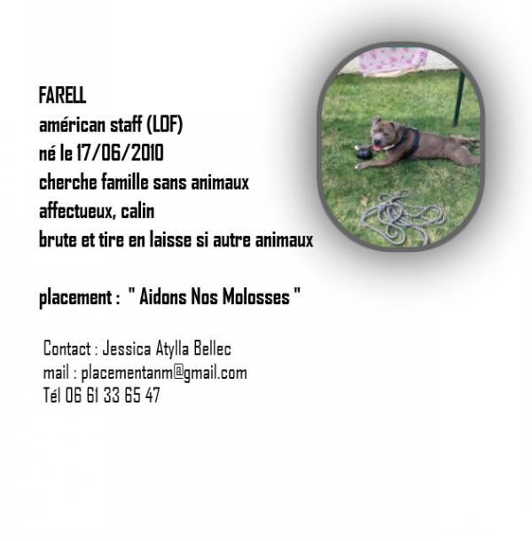Farell cherche une nouvelle famille
