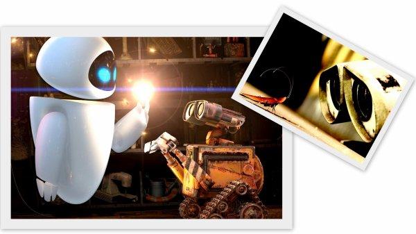 -   '  WALL  -  E  '   -