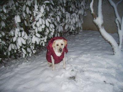 photo de ma chienne .... <3 ALLER SUR LE BLOG NEINEIGE !!!