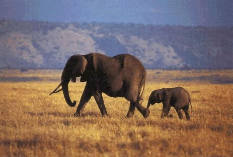 Parrainer un éléphant, aider une association de sauvegarde ou se porter éco-volontaire