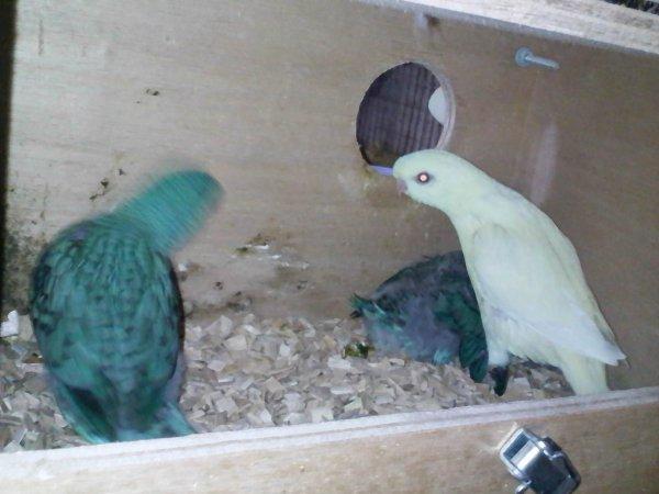 mes bébés cathes au nid