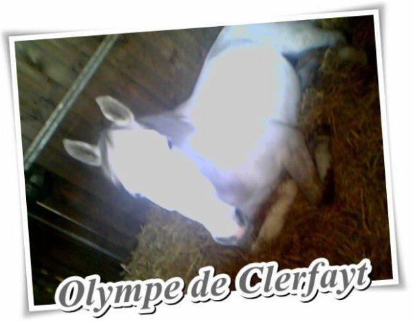 Olympe de Clerfayt, Son Histoire, Notre combat.
