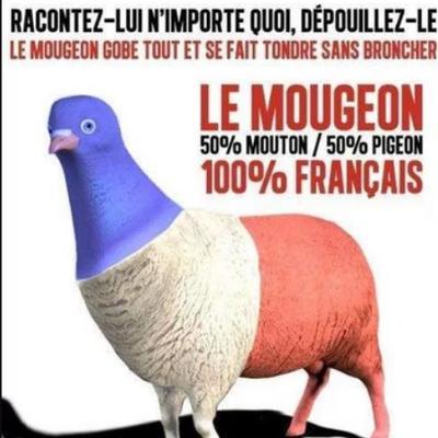 Le Mougeon, 100% Français