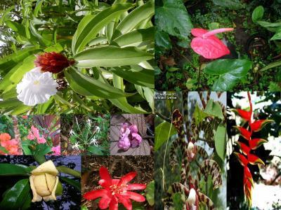 4300 especes de plantes a fleurs thunder heart association. Black Bedroom Furniture Sets. Home Design Ideas