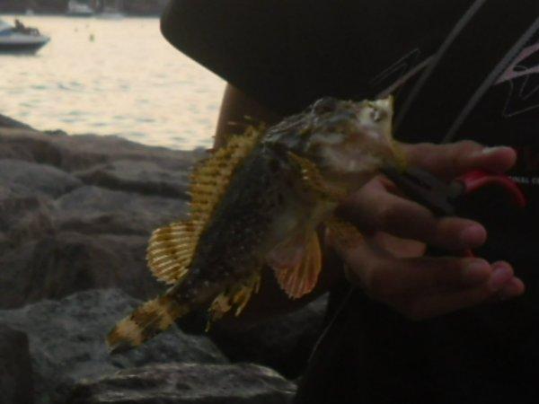 dernière session de pêche avant la rentré...