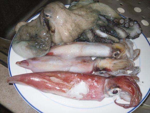 premier calamar!