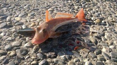 Nouvelle espece de poisson !