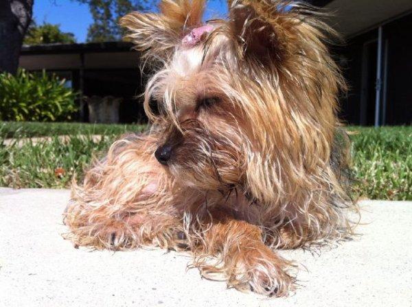 Voici une nouvelle photo de Lila au bord de la piscine , postée par Miley sur  Twitter .