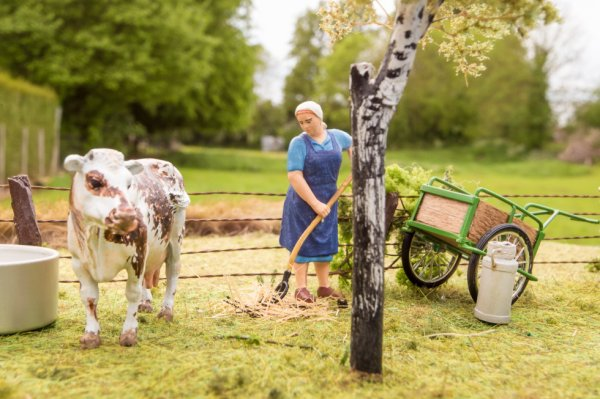 la yolande avec les vaches